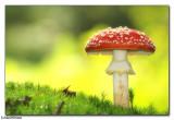 Plants & Fungi