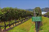 vineyards please