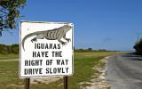 iguanas rule