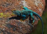Arizona Nature and Wildlife