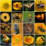 Yellow Mosaic.jpg