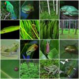 Green Mosaic.jpg