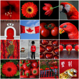 Red Mosaic.jpg
