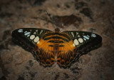 Butterfly0103.jpg