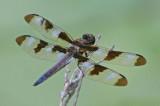 Dragonfly80807.jpg