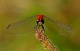 Dragonfly8040701.jpg