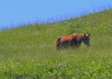 Horse on a hillside