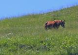 Horse grazing on a hillside