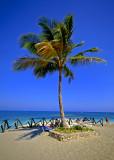 DR-Coconut-Tree.jpg