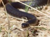 Reptiler - Reptiles