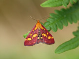 Årets fjärilar 2011 - Butterflies and moths 2011