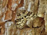 Årets fjärilar 2012 - Butterflies and Moths 2012