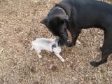 A little friend at the Bark Park