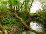 Magdalen  Laver  castle  mound. / 1