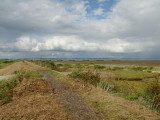 The  sea  dyke  to  the  North  of  St. Cedd's  Chapel.