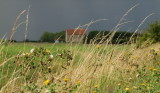 Flora  backed  by  the  approaching  storm