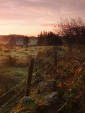 A  rural  dawn.