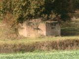 WW2  pillbox, under  the  shade  of  a  tall  tree.