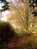 Autumn  colours  on  the  bridleway.