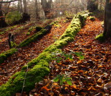 A  moss  covered  log, catches  the  early  sunlight.