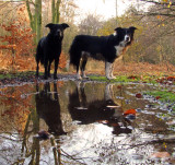 My  walking  companions.