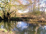 Bare  trees  reflect  in  the  River  Darenth