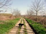 On  a   farmtrack  in  rural  splendour.