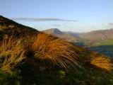 Grass  catching  the  rising  sun.