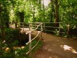 A  footbridge  in  the  woods.