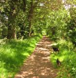 Eddie  and  Max  enjoying  a  country  walk.