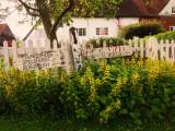 A   very   pretty  cottage  garden.