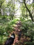 Wealdway  path  approaching  Crest  Farm