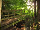 Footbridge  into  Hendall  Wood.