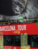 wild tour