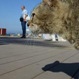 sombra de guepardo