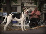 perro y persona