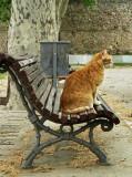 un gato en un banco