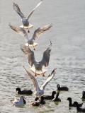 Seagull_.jpg