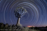 Morse code star trail with painted tree
