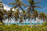 Isla Contoy palm trees