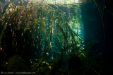 roots at Eden Cenote