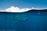 Whaleshark and clouds