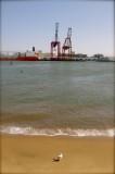 Beach, Boats & Gull