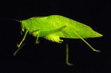 Nocturnal visitor.jpg