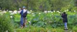 DSC_0619 crop wide R.jpg
