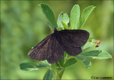 Chimney Sweeper - Rouwspanner_MG_4712