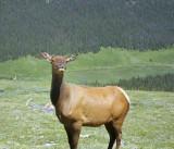 Elk1_1673.2000.jpg