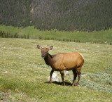 Elk2_1669.2000.jpg