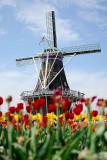 001-Windmill2.jpg