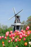 001-Windmill-Small1.jpg